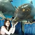 可愛的海豚