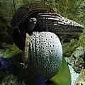 爆噁的~3隻海鰻從壺裡鑽出來