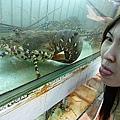 貴貴的七彩龍蝦~真想吃