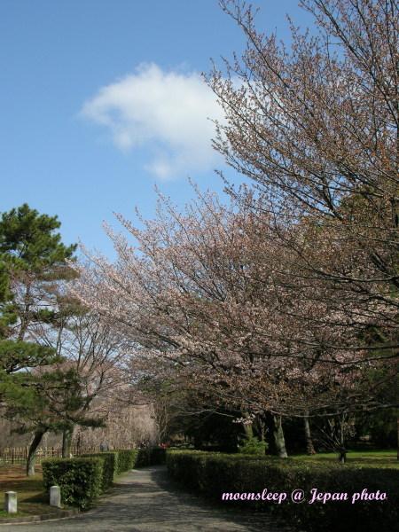 京都御苑一隅