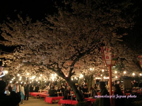 一群人在櫻花樹下喝酒划拳