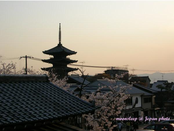 京都夕陽迎櫻