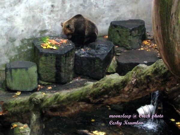 人家不要吃素啦!對著蔬菜發呆的熊...