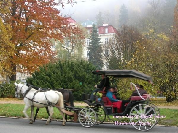遊客搭乘的馬車,繞著公園跑