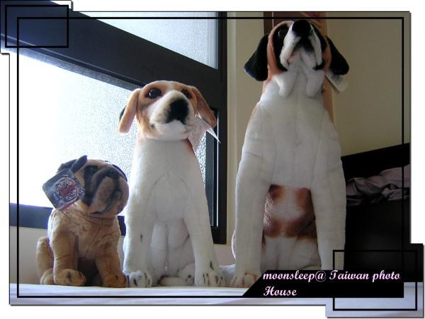 布偶狗狗們來張大眺望的模樣吧!
