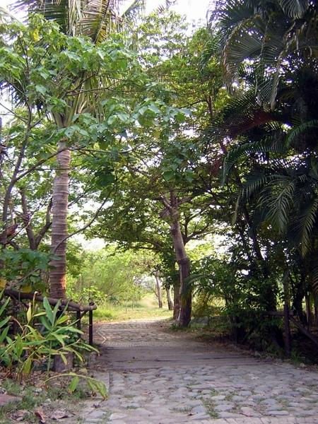 進入大門口右轉,沿著步道可至賞鳥的觀景台