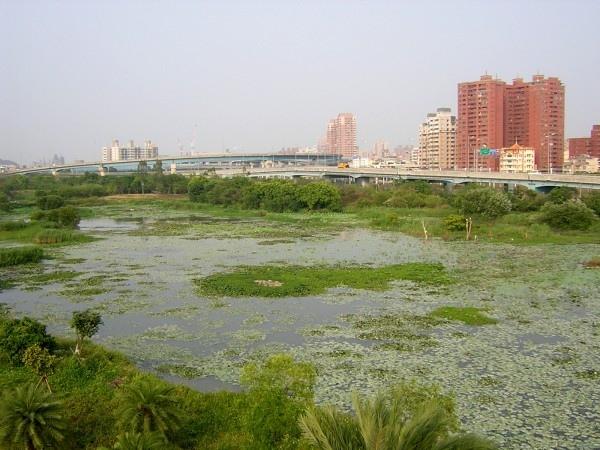 由賞鳥的觀景台觀看整個濕地