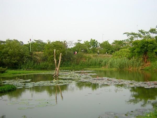 枯木、蓮荷倒映池中