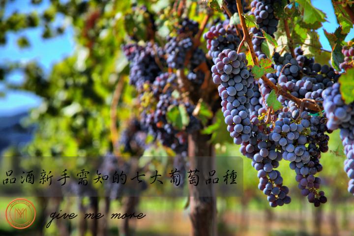 blog size 720x480品酒新手必知的七大葡萄酒品種.jpg