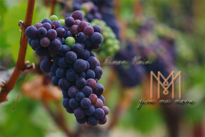blog size 720x480品酒新手必知的七大葡萄酒品種 Pinor Noir.jpg