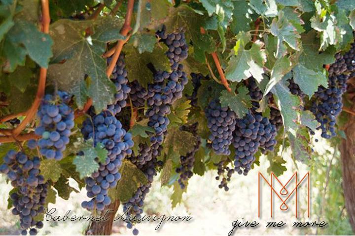 blog size 720x480品酒新手必知的七大葡萄酒品種 Cabernet Sauvignon.jpg