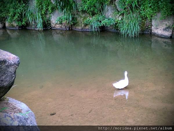 【旅。遊國內】放假去哪玩?台北-大溝溪親水公園 (7).jpg