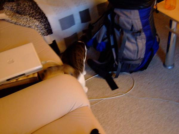 喂那是我的大背包啦!