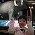 110226 (177) 好大的大象.jpg