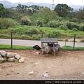 110405 (007) 駝鳥吃早餐.JPG