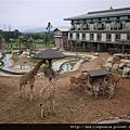 110405 (030) 長頸鹿真的沒有跟其他動物一起吃飯.JPG