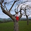 110410 (035) Tinnie 坐在樹上.jpg