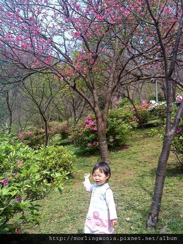 09022402 看  有櫻花.jpg