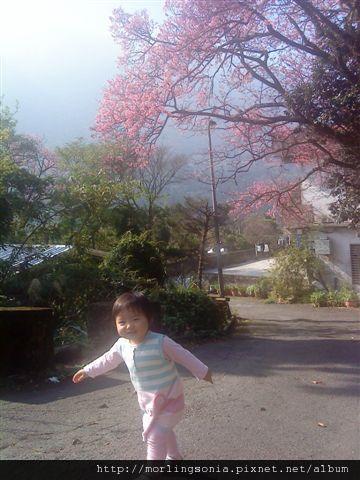 09022403 櫻花樹下.jpg
