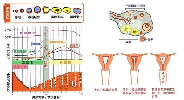 menstrual_period2.JPG