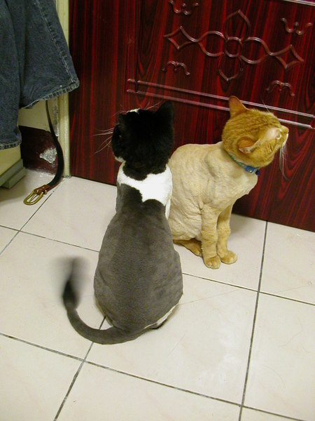 BENZ and MIAO