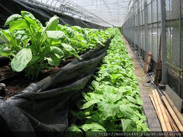 0711台灣植物工廠產業協會---金勇DIY蕃茄農場參訪&研討會 012