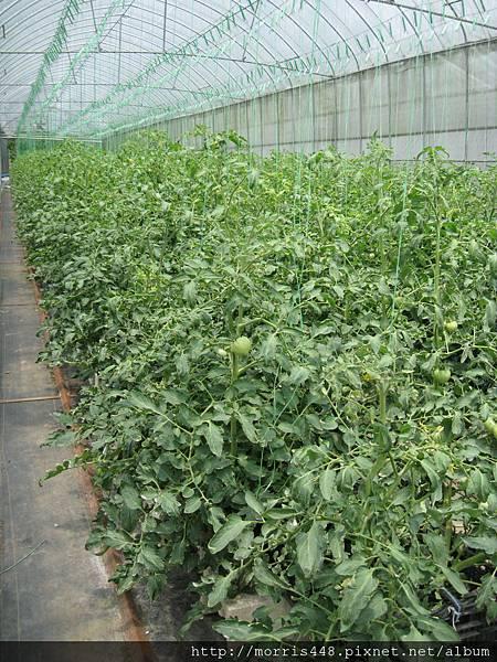0711台灣植物工廠產業協會---金勇DIY蕃茄農場參訪&研討會 021