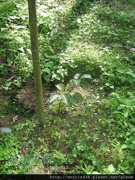 牛樟造林實例1LOGO