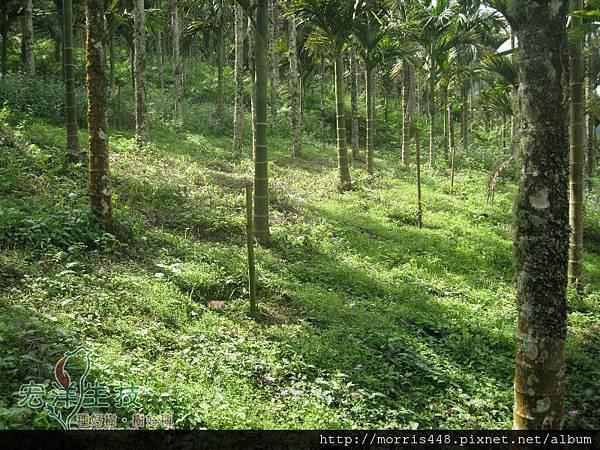 牛樟造林實例LOGO