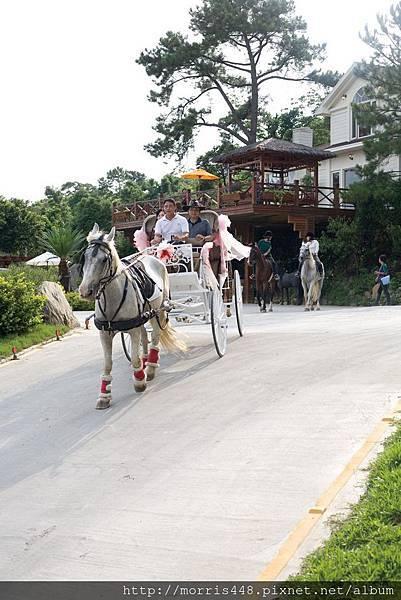 北台灣牛樟園馬車婚禮1