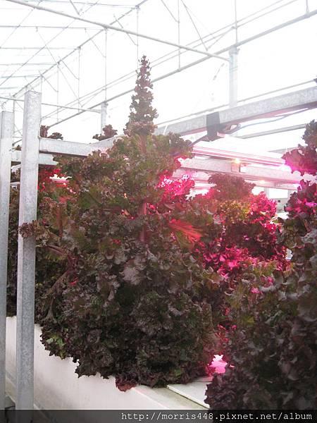 LED植物工廠