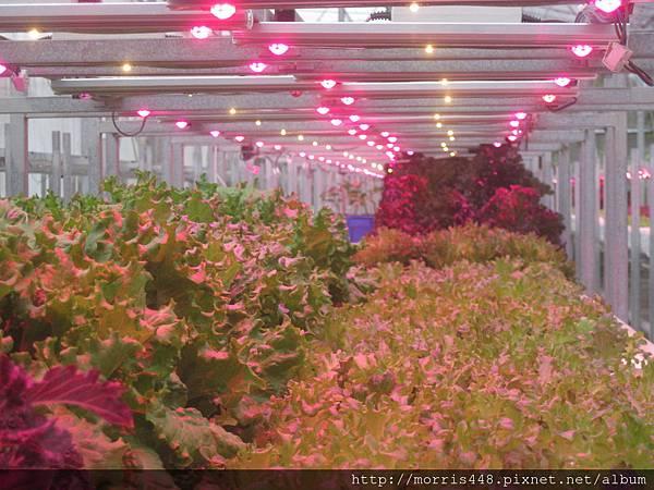 LED植物工廠 (1)