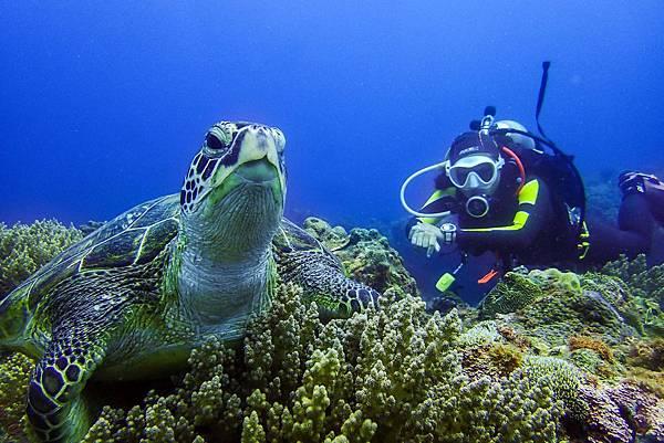 海龜與JOJO