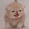 加菲貓2.jpg