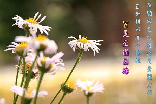 有願放在心裡沒有身體力行正如耕田而不播種皆是空過因緣