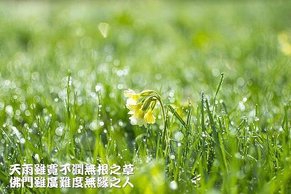 天雨雖寬不潤無根之草佛門雖廣難渡無緣之人