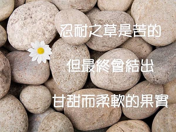 忍耐之草是苦的但最終會結出甘甜而柔軟的果實