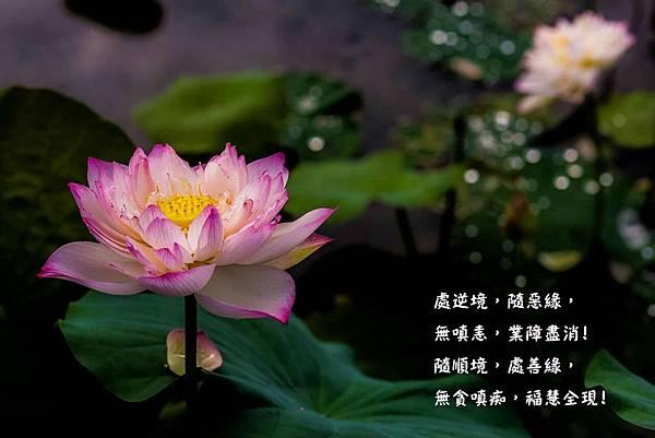 處逆境,隨惡緣,無嗔恚,業障盡消!隨順境,處善緣,無貪嗔痴,福慧全現!