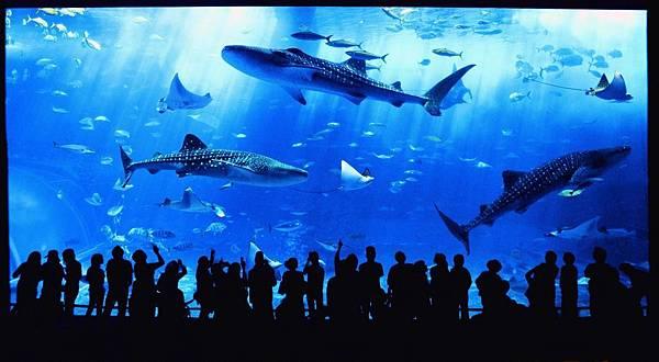 fish-沖繩自由行景點-沖繩景點推薦-親子-美麗水族館黑潮之海