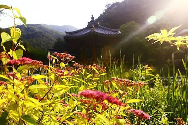 首爾自由行近郊景點