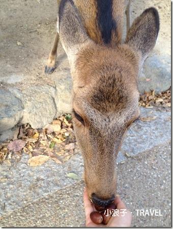 奈良懶人包_奈良一日遊行程_餵鹿