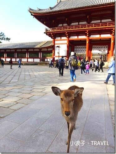 奈良攻略_奈良一日遊行程_東大寺3