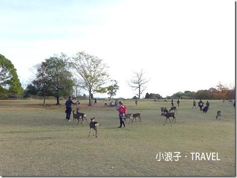 奈良自由行_奈良一日遊行程_玩鹿