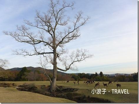 奈良自由行_奈良一日遊行程_玩鹿2