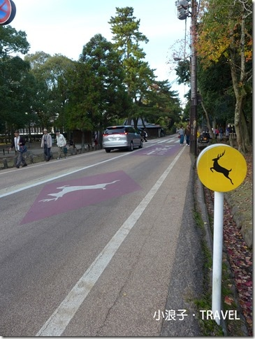 奈良自由行_奈良一日遊行程_鹿過馬路