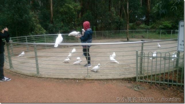 丹頓農山餵鸚鵡