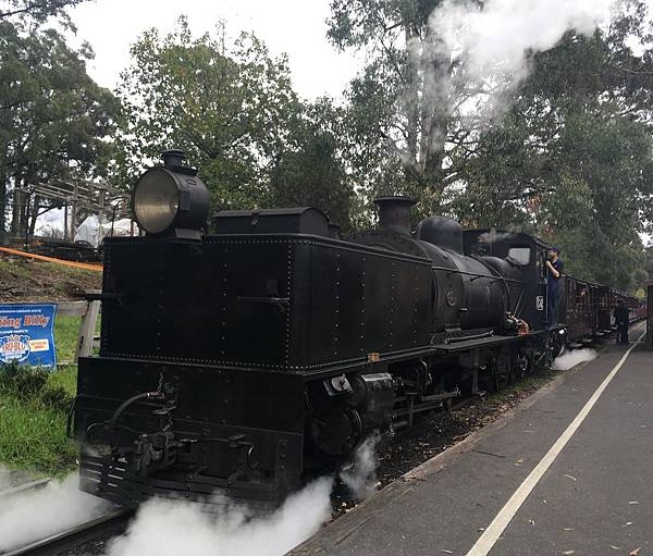 古老蒸氣火車Puffing Billy Steam Railyway