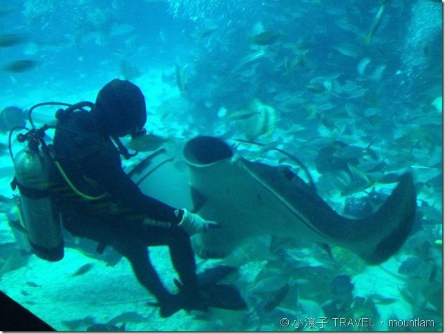 新加坡自由行 景點 聖淘沙 水族館 餵食表演2