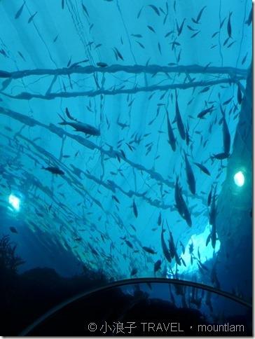 新加坡自由行 景點 聖淘沙 水族館3