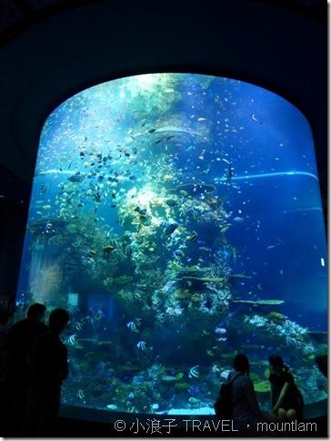 新加坡自由行 景點 聖淘沙 水族館5